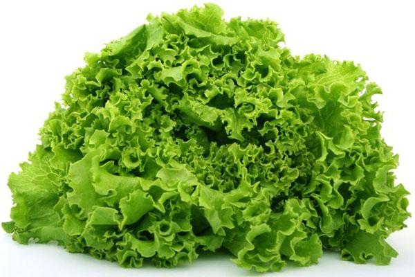 Hàm lượng vitamin C trong rau cải xoăn khá dồi dào