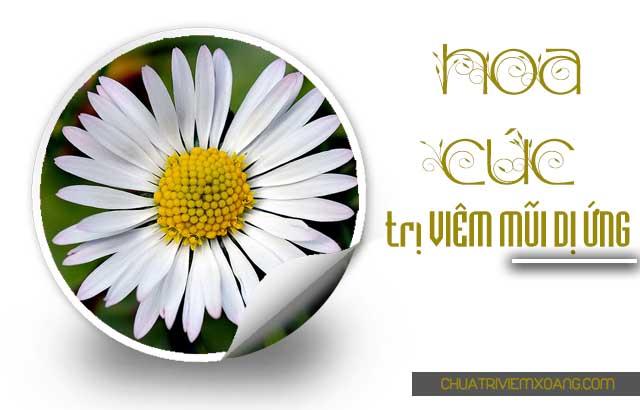 Hoa cúc - điều trị viêm mũi dị ứng