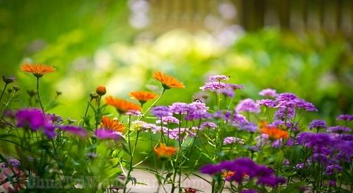 Phấn hoa tác nhân gây viêm mũi dị ứng