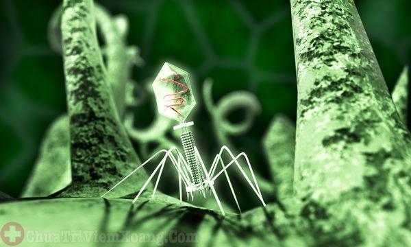 Virus nguyên nhân gây viêm đa xoang