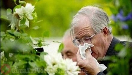 Tác nhân phấn hoa gây viêm mũi dị ứng người cao tuổi