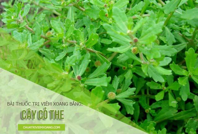 chữa viêm mũi dị ứng bằng cỏ the