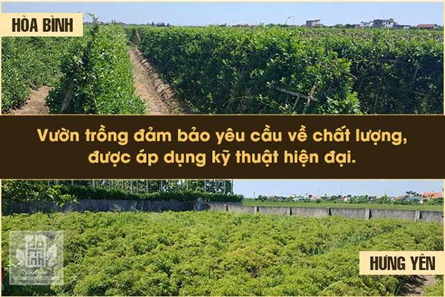 Vườn dược liệu sạch được đầu tư phát triển bởi nhà thuốc Đỗ Minh Đường